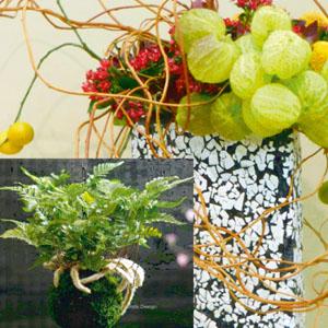 cours-art-floral-japonais-ikebana-kokedama